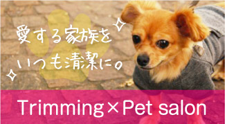 Trimming X Pet salon
